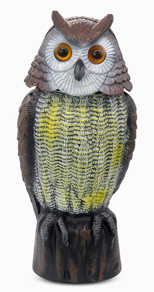 Action Owl With Moving Head Uk Amp Intl No More Birds