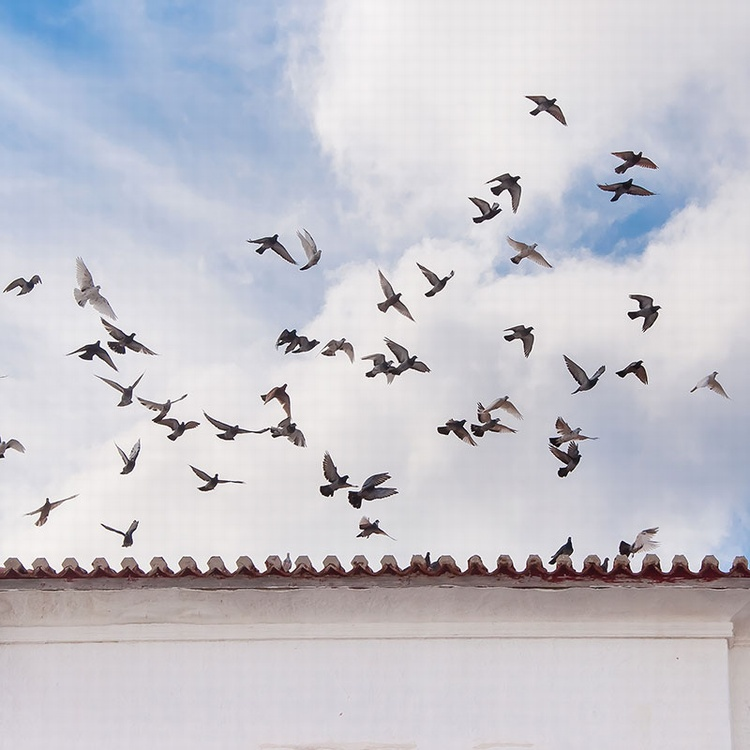 How to Get Birds off Your Roof